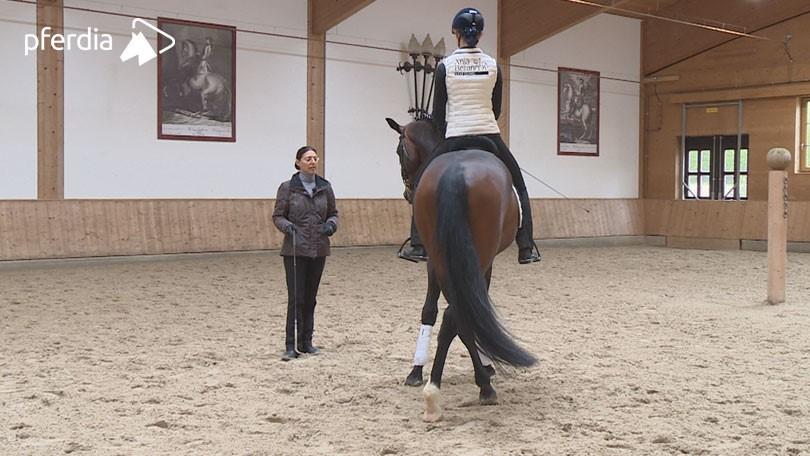 Schenkelend paard